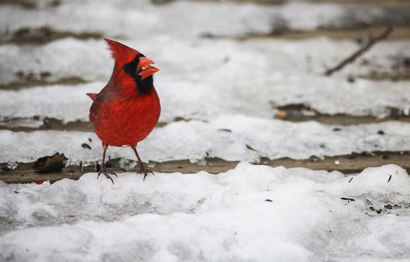 PAD Jan 16 Cardinal Two