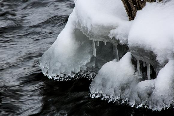 PAD Jan 31 Majestic Ice Sculpture
