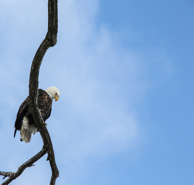 PAD Jan 16 Eagle One