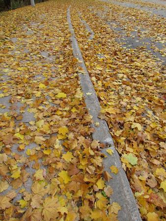 PAD Nov 7 Curb Sighting